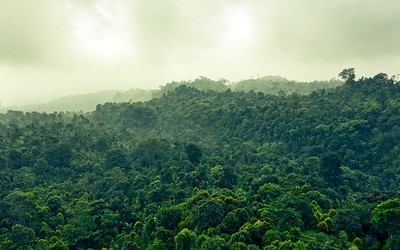 Rainforest canopy with rain clouds
